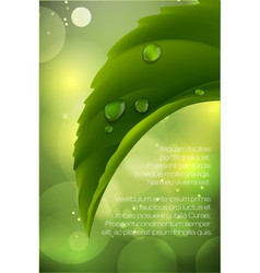 dew drops on green leaves vector image
