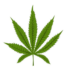 marijuana canibas or hemp leaf isolated vector image