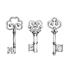 Sketch of vintage keys with curly elements vector image