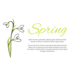 spring floral banner with text made snowdrops vector image