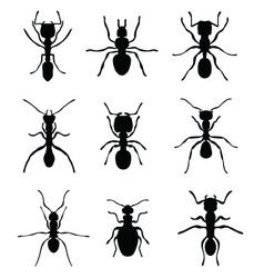 ants vector image
