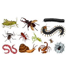 Big set of insects vintage pets in house bugs vector