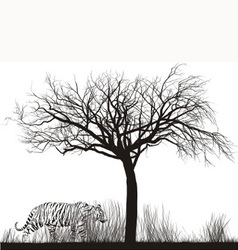 Tiger in tall grass vector image vector image