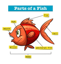 Diagram showing parts of fish vector