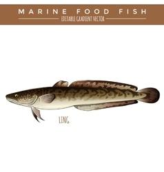 Ling Marine Food Fish vector