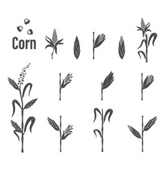 corn icon - vector image