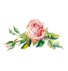 Decorative hand painting of rose isolated on white vector