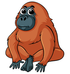 gorilla with brown fur vector image