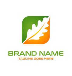 oak leaf logo box vector image