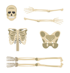 Skeleton parts icon human skeleton front side vector