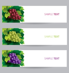 Grape Vine Banner vector image vector image