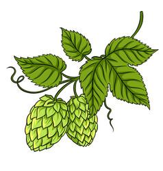branch of hops pop art vector image