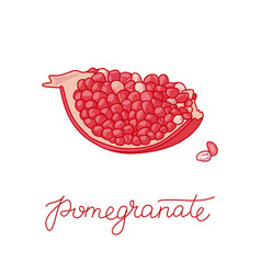 pomegranate fruit doodle vector image