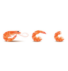 Shrimp seafood set prawn with head and vector