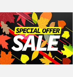 Special offer autumn sale banner vector