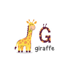 alphabet letter g and giraffe vector image