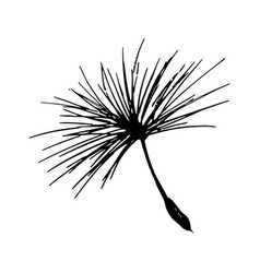 dandelion seed pencil sketch vector image
