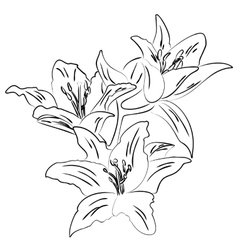 Lily with bud outline sketch vector image