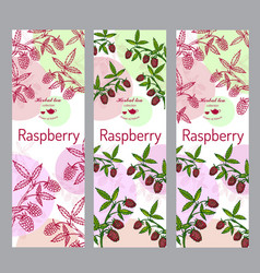 herbal tea collection raspberry banner set vector image