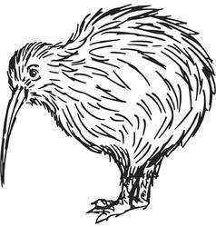kiwi vector image