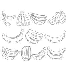 set different bananas vector image
