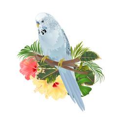 bird budgerigar home pet blue pet parakeet vector image