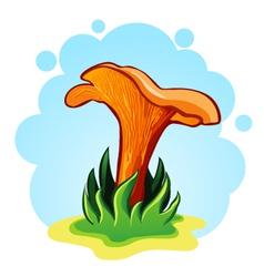 chanterelle mushrooms vector image