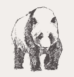 panda hand drawn sketch linear vector image