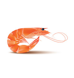 shrimp seafood prawn with head and legs vector image