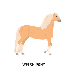 welsh pony flat cute beige vector image
