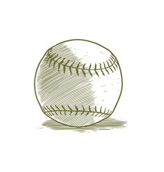 woodcut baseball vector image