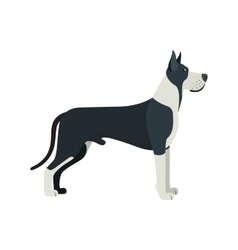 Great Dane dog breed - on white background vector image