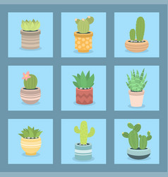 Cactus green plant cactaceous home nature cacti vector