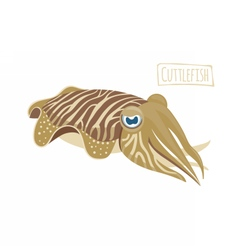 Cuttlefish vector