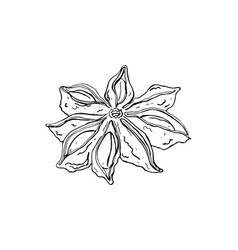 Isolated seasoning star anise on white background vector