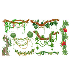 jungle vines tropical tree branches with hanging vector image