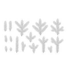 set pine fir silver branches spruce branches vector image