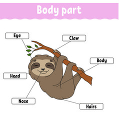 Body part learning words education developing vector