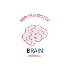 Brain side view diagram human nervous system vector