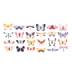 cute butterflies decorative spring butterfly vector image