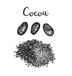 ink sketch of cocoa powder vector image