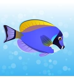 Powder Blue Tang fish vector