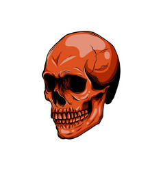realistic red skull for designer on vector image