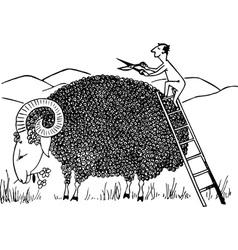 sheep haircut vector image