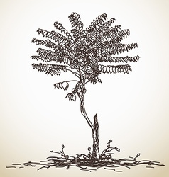 Sketch of small tree vector image vector image