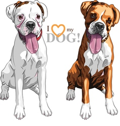 Sketch two domestic dog boxer breed vector