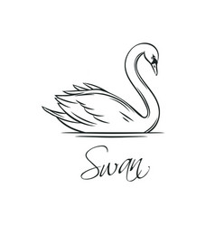 swans outline icon vector image