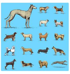 dog breeds engraved hand drawn vector image