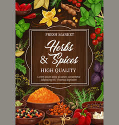 herbs and spices seasonings and condiments vector image