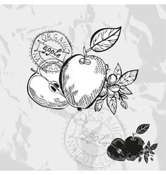 Hand drawn decorative apples vector